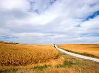 Iowa - Farms