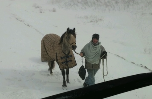 girl rides horse to help truck driver