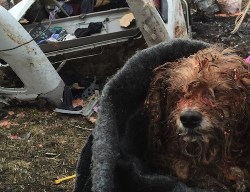 dog rescued from fiery semi-truck